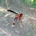 Metricus Paper Wasp
