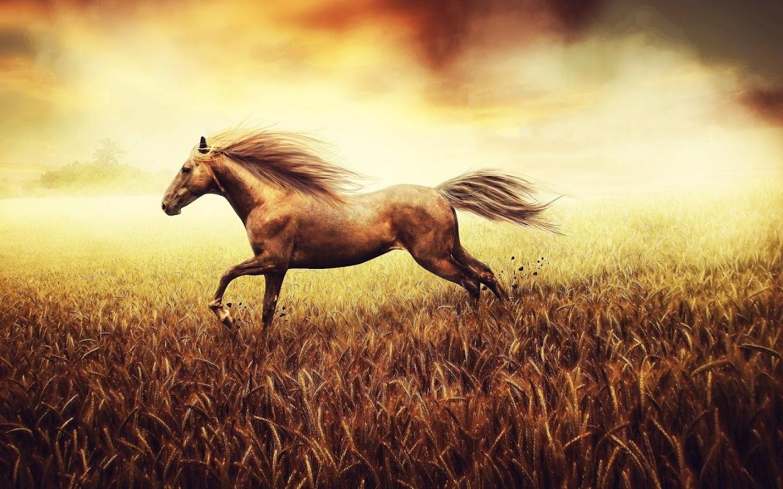 häst frågesport