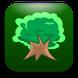 Dylan Tree Memorabilia Store
