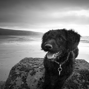 Covered it in What? by Anthony Ashcroft - Animals - Dogs Puppies ( barmouth, black and white, sea, puppy, seaside, dog, animal,  )