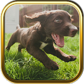 Free Cute Puppy Puzzle Games