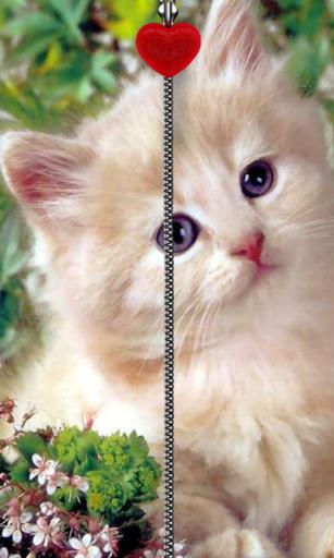 小貓拉鍊鎖屏