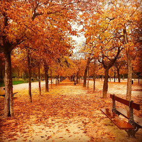 A Romantic Walk by Abhishek Shirali - Nature Up Close Leaves & Grasses ( fall leaves on ground, fall leaves, inspiration, moods, colorful, autumn, january, madrid, emotions, romantic, happiness, vibrant, spain, mood factory )