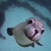 Sea Life HD