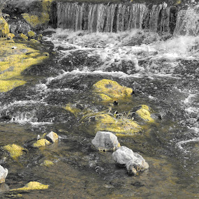 Water Selective by Rahul Savaliya - Nature Up Close Water ( water, new, nature, selective, color, white, yellow, latest, garden, flower, black,  )