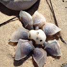 Buoy barnacle