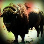 Buffalo Sound Effects