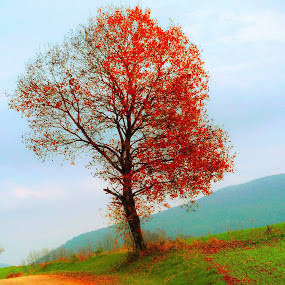 My life near village road by Vladimir Krizan - Nature Up Close Trees & Bushes