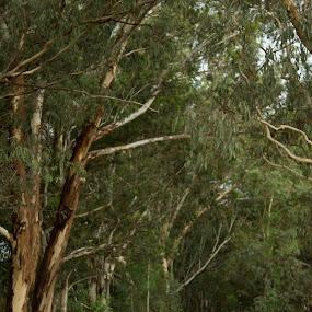 Into the woods by Béanca Van Heerden - Wedding Bride & Groom ( green, trees, bride, running, groom, barefoot )
