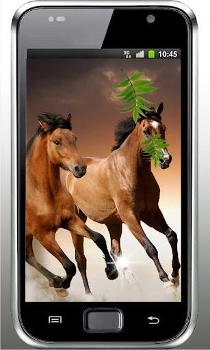 Horses Dances live wallpaper