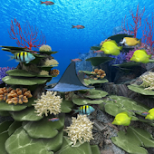 Coral Reef of Kerama