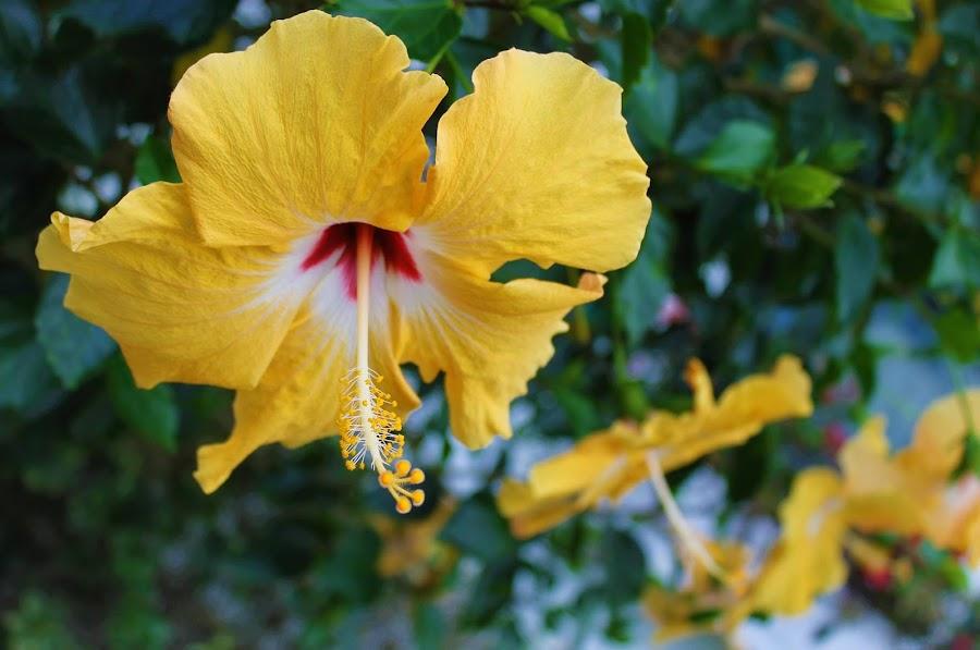 by Denise O'Hern - Flowers Single Flower (  )