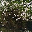 Flowering - Raffles Girls' School