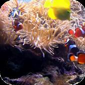 Fish underwater video LiveWP