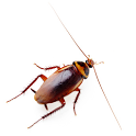 Bugs Live Wallpaper icon