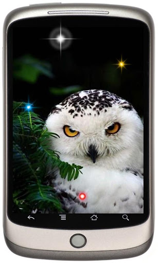 Owl Collection live wallpaper