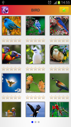 Animal Book: Colourful