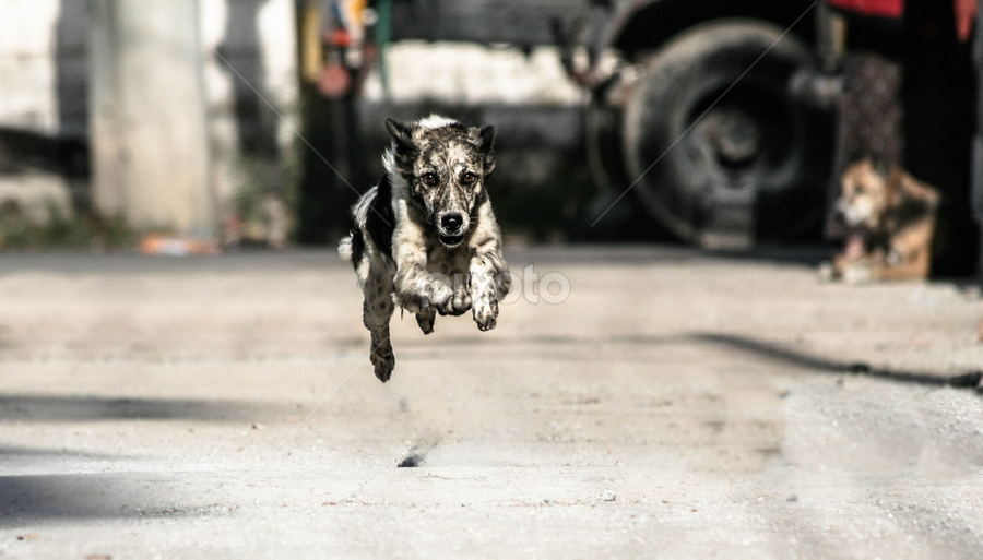 The Run by Avishek Bose - Animals - Dogs Running ( charge, run, scary, chase, moment )