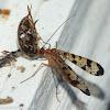 Scorpion fly vs. pillbug