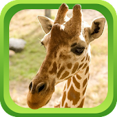 Wild Animal Games & Sounds