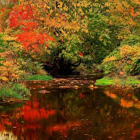 Autumn Reflections by Jonathan Wheeler - Landscapes Waterscapes ( water, autumn, reflections, motion, leaves, mountain streams )