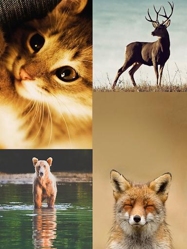 野生動物壁紙