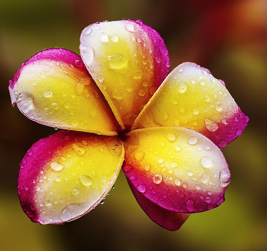 by Timfranz Morante - Flowers Single Flower