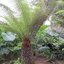 plant: tree