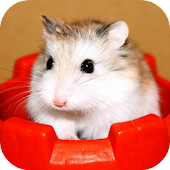 The Amazing Talking Hamster