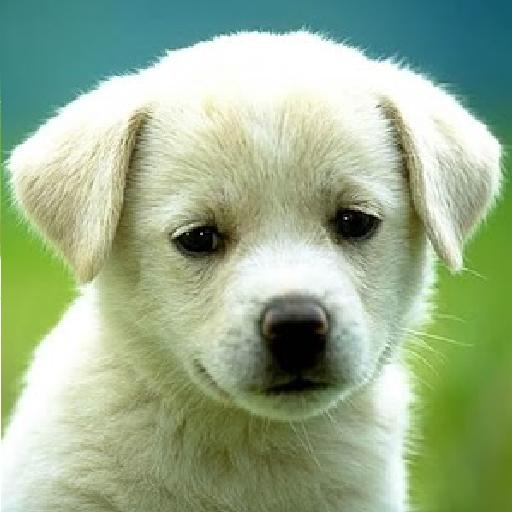 1 Million Best Dogs Wallpaper LOGO-APP點子