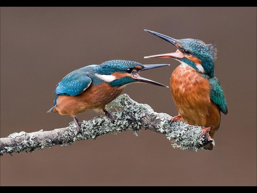 by Marlene Finlayson - Animals Birds