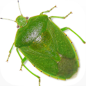 Stink Bug Decision Aid icon
