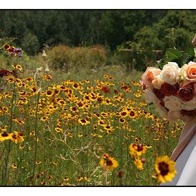 Flowery field by Béanca Van Heerden - Flowers Flowers in the Wild ( Flowers, Flower Arrangements )