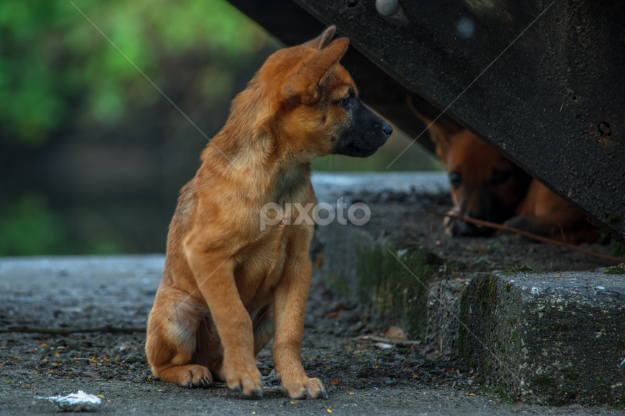 Waiting my mother by Waraphorn Aphai - Animals - Dogs Puppies ( #pity, #hungry, #mother, #puppies, #waiting, #hope, #loveanimals, #cutepuppies, baby, young, animal )