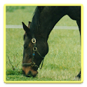 Horse Nutrition Quiz icon