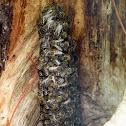 Unknown Bees