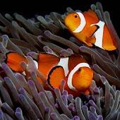 iSlider Aquarium Fish Puzzles
