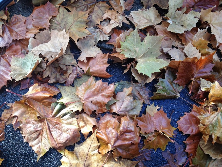 Leaves - No Filter by Lance Hammond - Instagram & Mobile Android ( nature, cold, fall, leaves, rain )