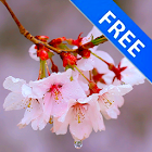 3D Drizzles Cherry Branch Free icon