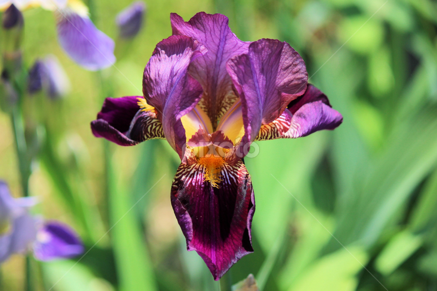 Monday's Best 28 by Terry Saxby - Flowers Single Flower ( canada, terry, ontario, batawa, saxby, nancy, flower,  )
