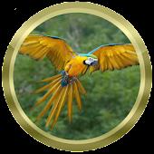 Parrot Species Compendium
