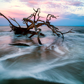 Sunset Jekyll ISland by George Holt - Landscapes Waterscapes ( driftwood, tree, sunset, ocean, long exposure, seascape, beach )
