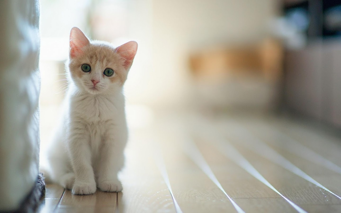 Baby Cat Wallpaper HD Android Apps on Google Play