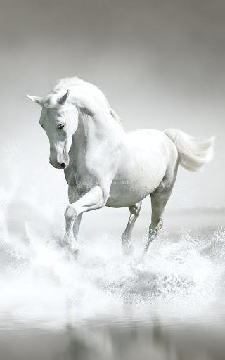 玩個人化App|馬匹動態壁紙免費|APP試玩