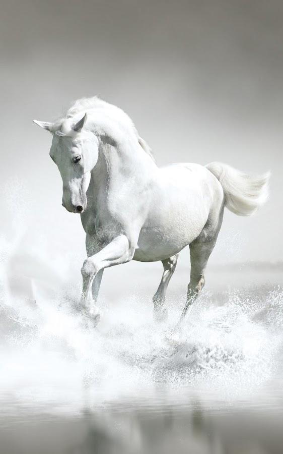 live wallpaper of horses