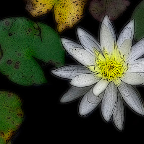 The Water Lily by Lisa Wessels - Digital Art Things ( green, art, white, leaves, water lily, pond, flower )