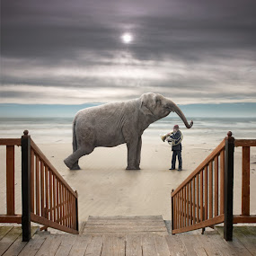 Lesson by Dariusz Klimczak - Digital Art People ( tube, elephant, square, surreal, man )