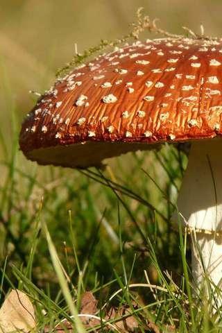 野蘑菇拼圖