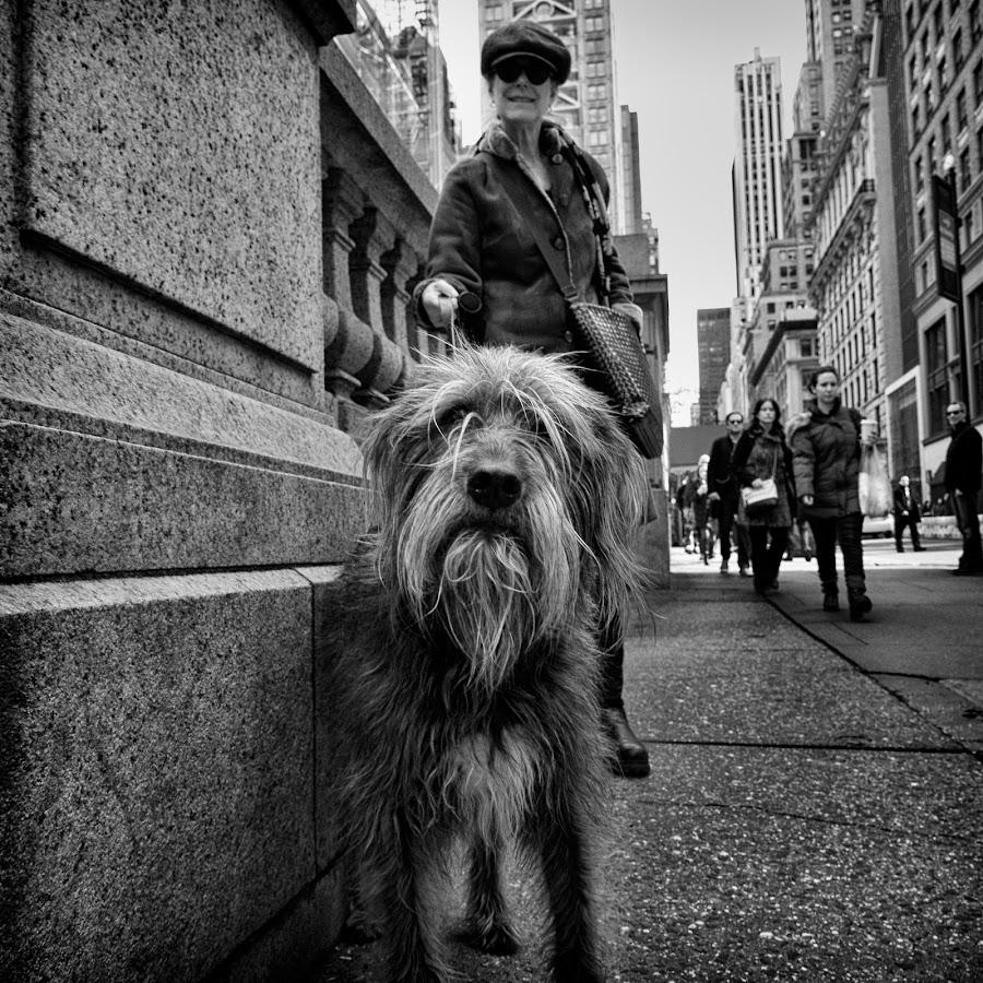 Neville by Alan Roseman - Black & White Street & Candid ( st. patty, lumix, street, city life, nyc, new york city, st. patrick,  )
