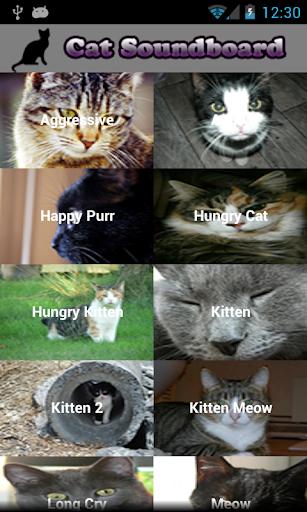 Cat Ringtones